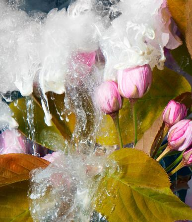 Bizarre「flowers and paint in water」:スマホ壁紙(1)