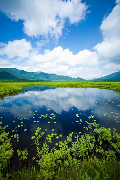 Marsh that stretches to marshland:スマホ壁紙(壁紙.com)