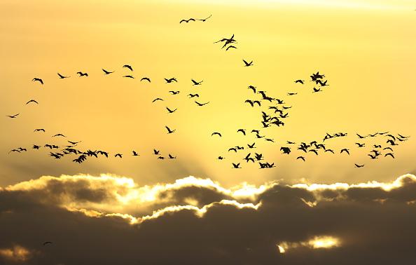 Sunset「Migratory Birds Stop At Linum」:写真・画像(6)[壁紙.com]