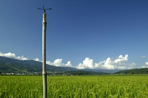 とんぼ「Dragonfly In Rice Field」:スマホ壁紙(15)
