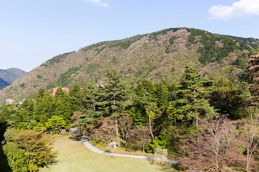 Japan「Forested Foothills of Mount Asama, Hakone, Kanagawa Prefecture, Japan」:スマホ壁紙(18)
