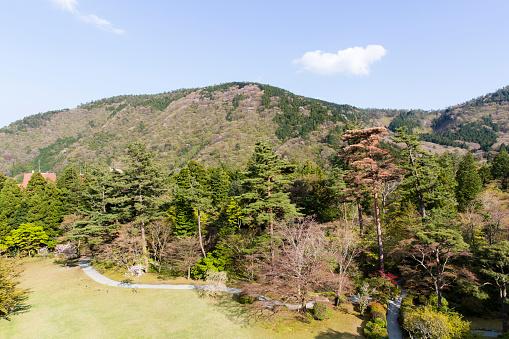 Japan「Forested Foothills of Mount Asama, Hakone, Kanagawa Prefecture, Japan」:スマホ壁紙(16)