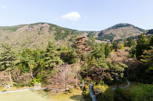 Japan「Forested Foothills of Mount Asama, Hakone, Kanagawa Prefecture, Japan」:スマホ壁紙(19)