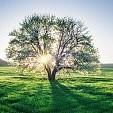 Tree Area壁紙の画像(壁紙.com)