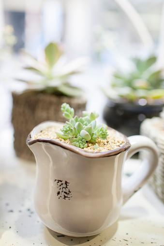 Flower Shop「Succulent plant」:スマホ壁紙(5)