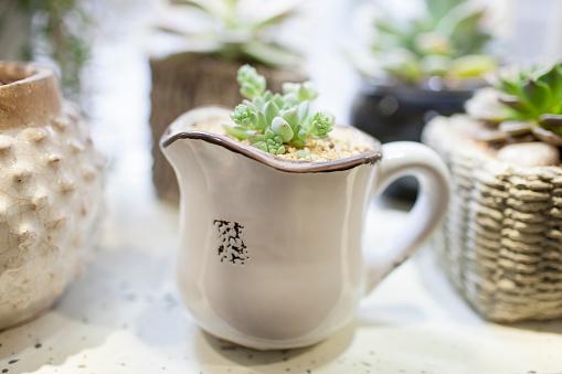 Flower Shop「Succulent plants」:スマホ壁紙(1)