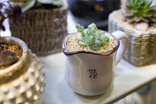 Flower Shop「Succulent plants」:スマホ壁紙(4)