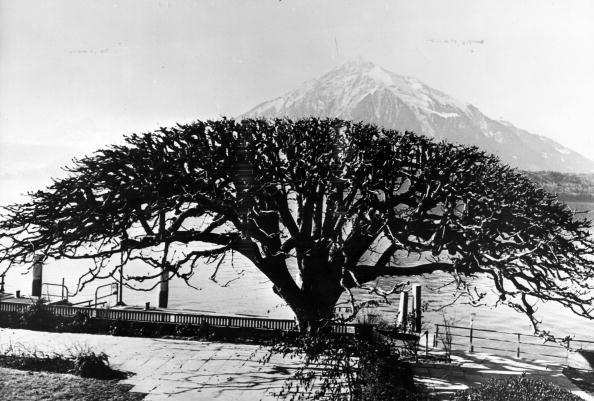 Headwear「Gunten Tree」:写真・画像(2)[壁紙.com]