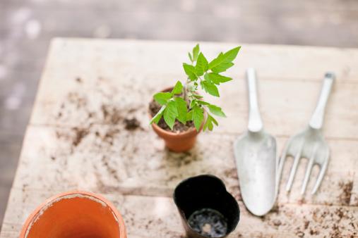 週末の予定「たての苗を植えたセラミック植木鉢」:スマホ壁紙(14)