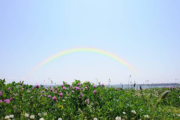 Grasslands with clover and rainbow overhead. Ota Ward, Tokyo Prefecture, Japan:スマホ壁紙(壁紙.com)