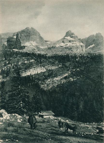 Pasture「View of the Brenta Group with alpine pasture, Madonna di Campiglio, Dolomites, Italy」:写真・画像(8)[壁紙.com]