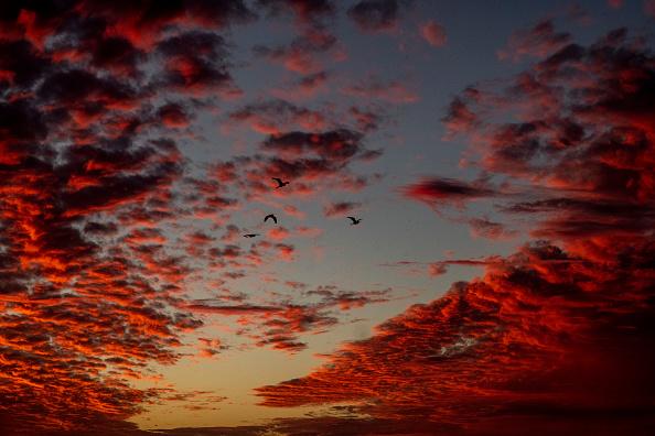 Sunset「Sunset Birds At Long Beach」:写真・画像(9)[壁紙.com]