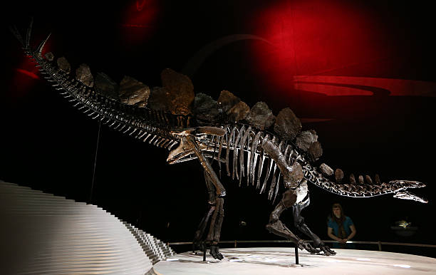 Complete Stegosaurus Fossil Unveiled At Natural History Museum:ニュース(壁紙.com)