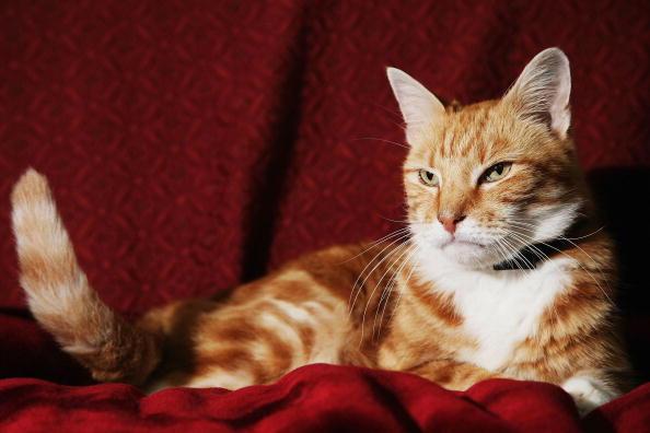 Sofa「Cat Missing For 11 Years Returns Home」:写真・画像(18)[壁紙.com]