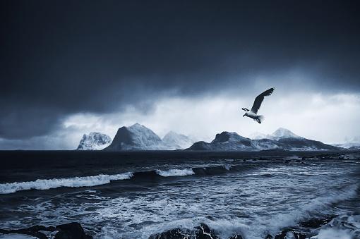 Seagull「Sea gull flying over sea, Lofoten, Nordland, Norway」:スマホ壁紙(19)