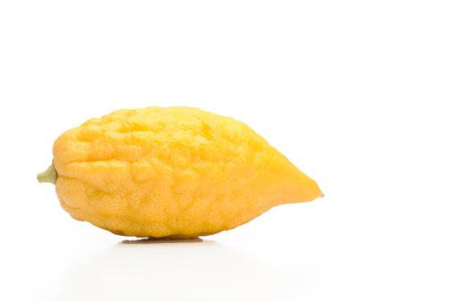 Frond「Sukkoth Citron」:スマホ壁紙(14)