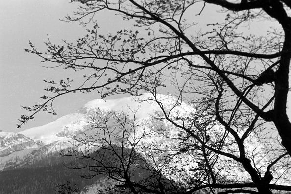 Journey「Berchtesgaden National Park」:写真・画像(14)[壁紙.com]
