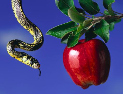 Evil「Snake and apple in tree」:スマホ壁紙(19)