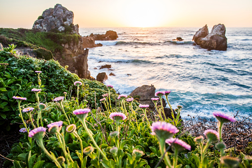 Big Sur「Flowers on rocks near ocean」:スマホ壁紙(12)