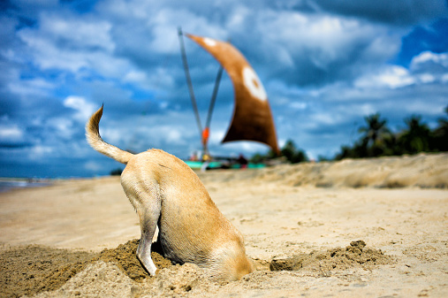 Auto Post Production Filter「Dog digging for crabs」:スマホ壁紙(5)