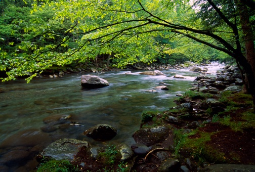Tennessee「Little Pigeon River in spring」:スマホ壁紙(6)