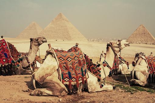 Pyramid Shape「Camels and Pyramid」:スマホ壁紙(12)
