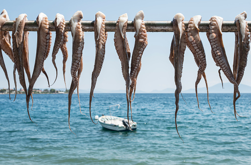 Animal Arm「Greece, Agria, octopus hanging to dry on bar at the sea」:スマホ壁紙(10)