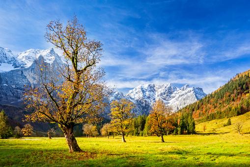 European Alps「Maple Valley in Austrian Alps - Großer Ahornboden natural reserve」:スマホ壁紙(15)