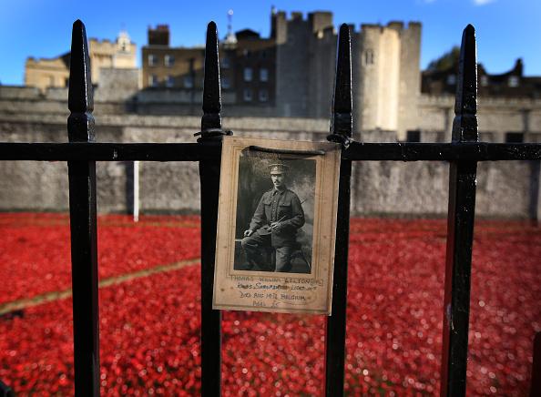 Poppy - Plant「The UK Observes Remembrance Sunday」:写真・画像(11)[壁紙.com]