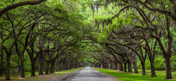 Savannah「Live Oak Trees」:スマホ壁紙(10)