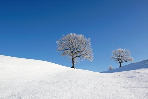 Hill「Germany, Pfaffenwinkel, frost-covered trees at winter landscape」:スマホ壁紙(15)