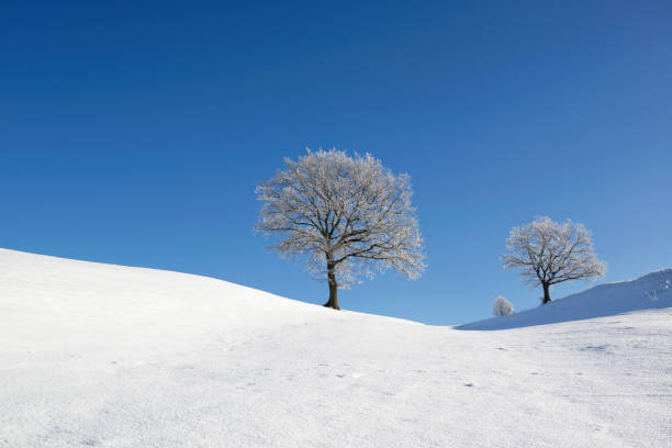 Germany, Pfaffenwinkel, frost-covered trees at winter landscape:スマホ壁紙(壁紙.com)