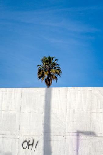 Single Tree「Palm Tree behind a wall」:スマホ壁紙(10)