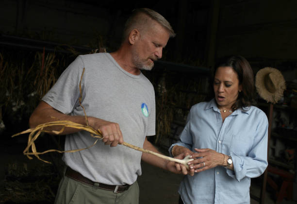 Presidential Candidate Kamala Harris Takes Campaign Bus Trip Across Iowa:ニュース(壁紙.com)