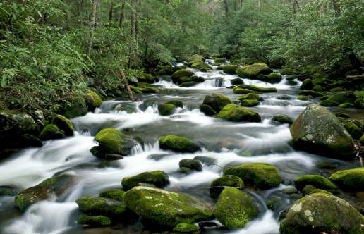 Roaring Fork River「USA, Tennessee, Great Smoky Mountains NP, Roaring Fork River, spring」:スマホ壁紙(2)