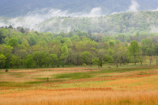 Cades Cove「USA, Tennessee, Great Smoky Mountains National Park, field at sunrise」:スマホ壁紙(16)