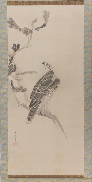 Perching「Hawks (Taka Zu)」:写真・画像(10)[壁紙.com]