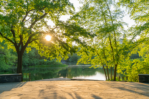 Sunset「The sunset light illuminates the fresh green leaves and Turtle Pond at Central Park New York in the spring.」:スマホ壁紙(15)