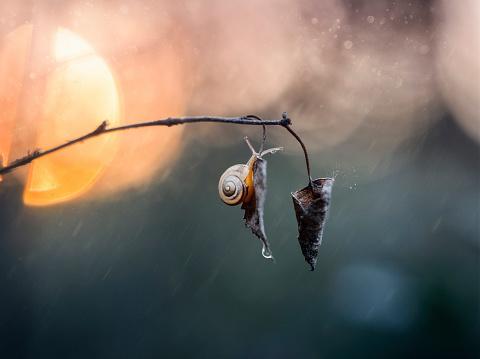 snails「Snail hanging on leaf in rain」:スマホ壁紙(11)