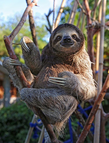 Animal Wildlife「Happy, rescued Sloth」:スマホ壁紙(2)