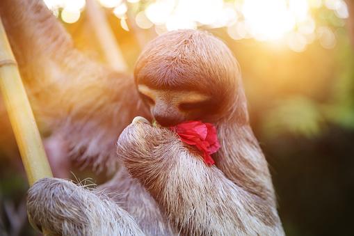 Human Abdomen「Happy, rescued Sloth」:スマホ壁紙(19)