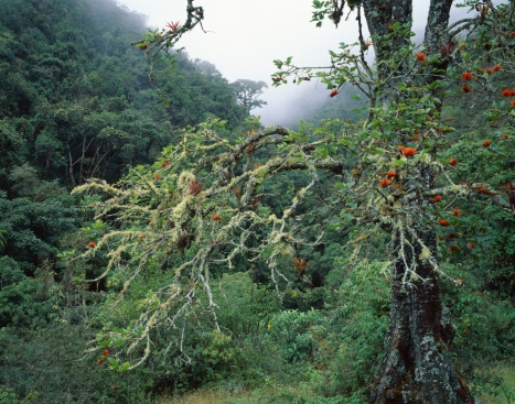Bolivian Andes「Unique tree in a foggy forest」:スマホ壁紙(13)