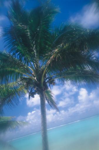 Frond「Palm on Beach」:スマホ壁紙(6)