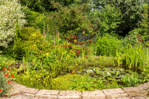 Water Garden「Garden pond in Summer」:スマホ壁紙(12)