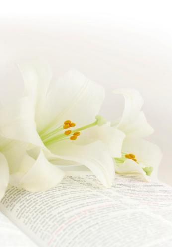 Easter「Easter lilies on a KJV Bible」:スマホ壁紙(13)