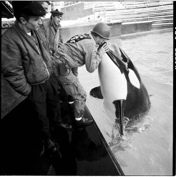Killer Whale「Madness」:写真・画像(3)[壁紙.com]