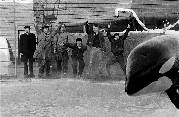 Killer Whale「Madness」:写真・画像(7)[壁紙.com]
