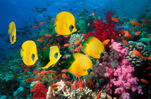 Tropical fish「Fish over coral reef, underwater view, (digital composite)」:スマホ壁紙(6)