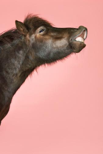 Horse「Black Pony」:スマホ壁紙(0)