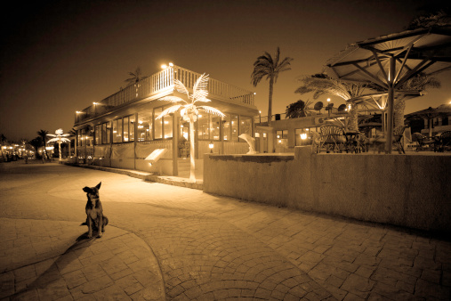 Sepia Toned「Small Dog Sitting on Egyptian Street at Night」:スマホ壁紙(18)